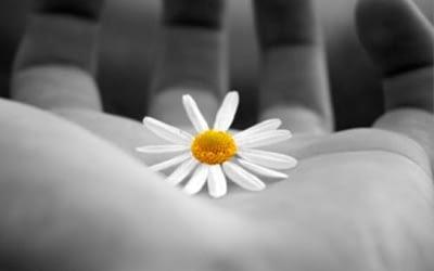Cosa è meglio, perdonare o vendicarsi?