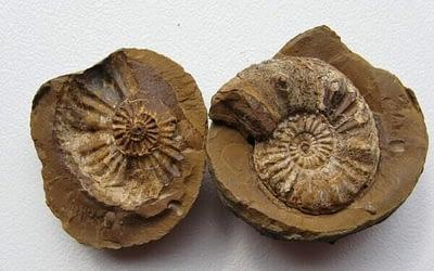 I fossili non provano forse l'evoluzione?