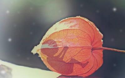 Aborto e cancro al seno